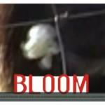 video_Bloom
